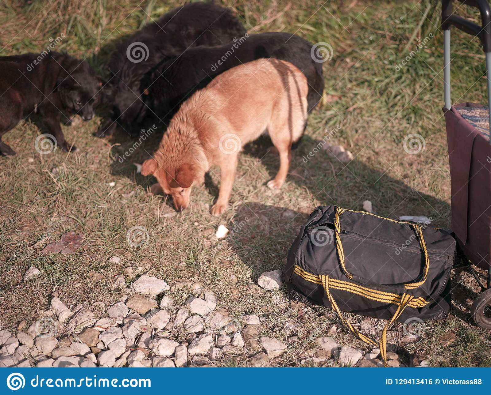 Lugagge and stray dogs stock photo  Image of trolley - 129413416