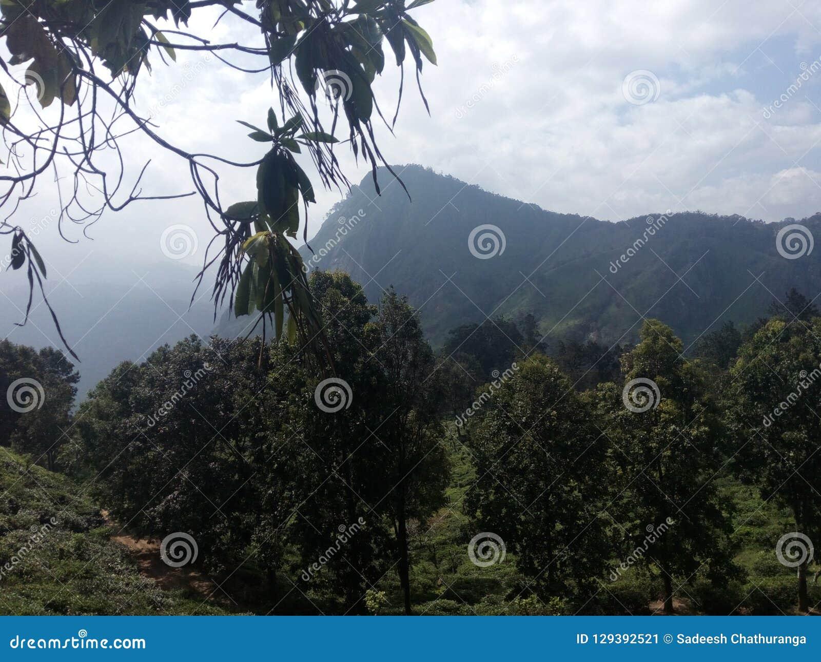 Lugar hermoso de la naturaleza Ella Sri Lanka