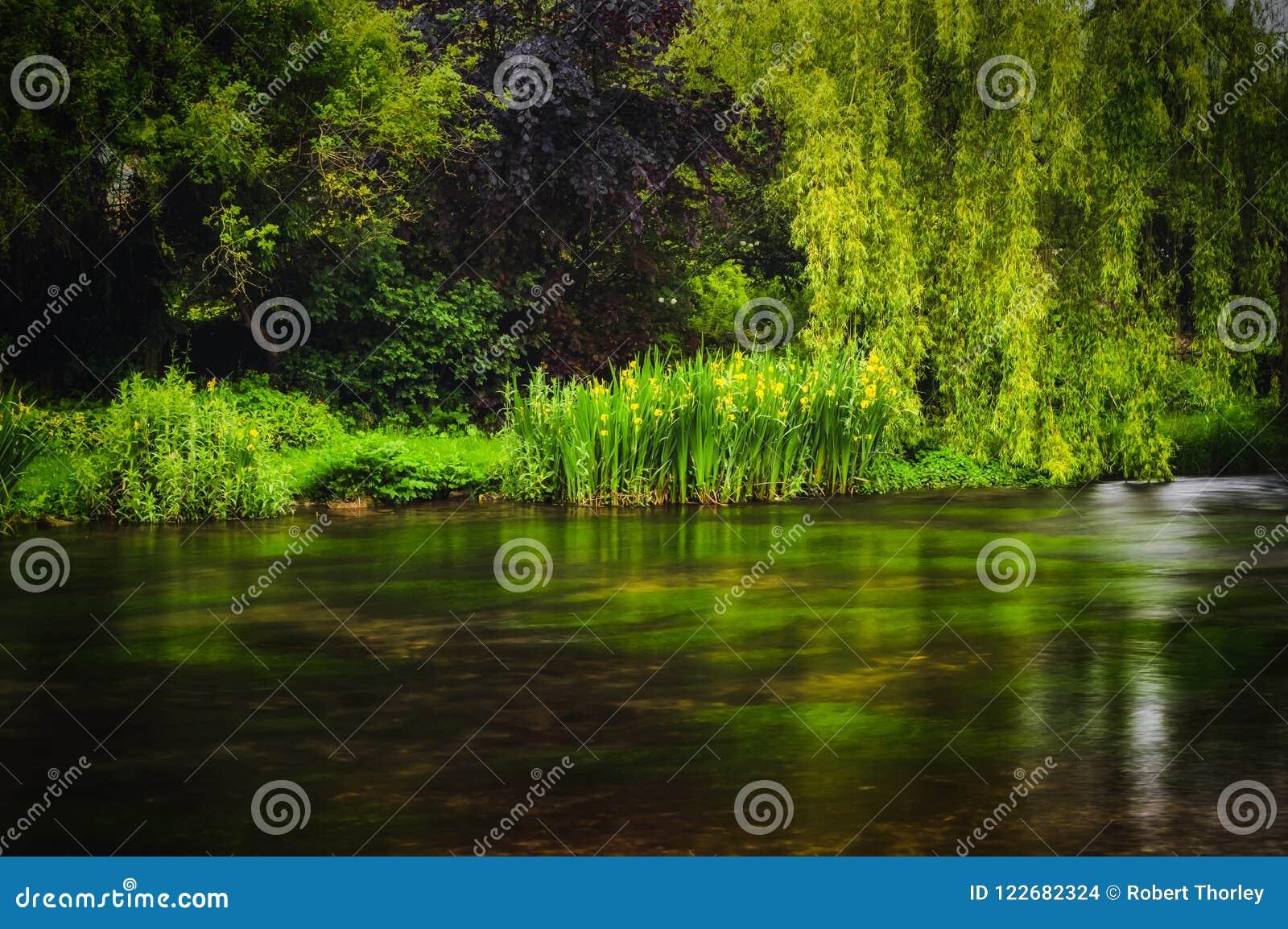Luksusowe zielone rośliny i drzewa r wzdłuż brzeg rzeki przy wodą w Szczytowym Gromadzkim parku narodowym