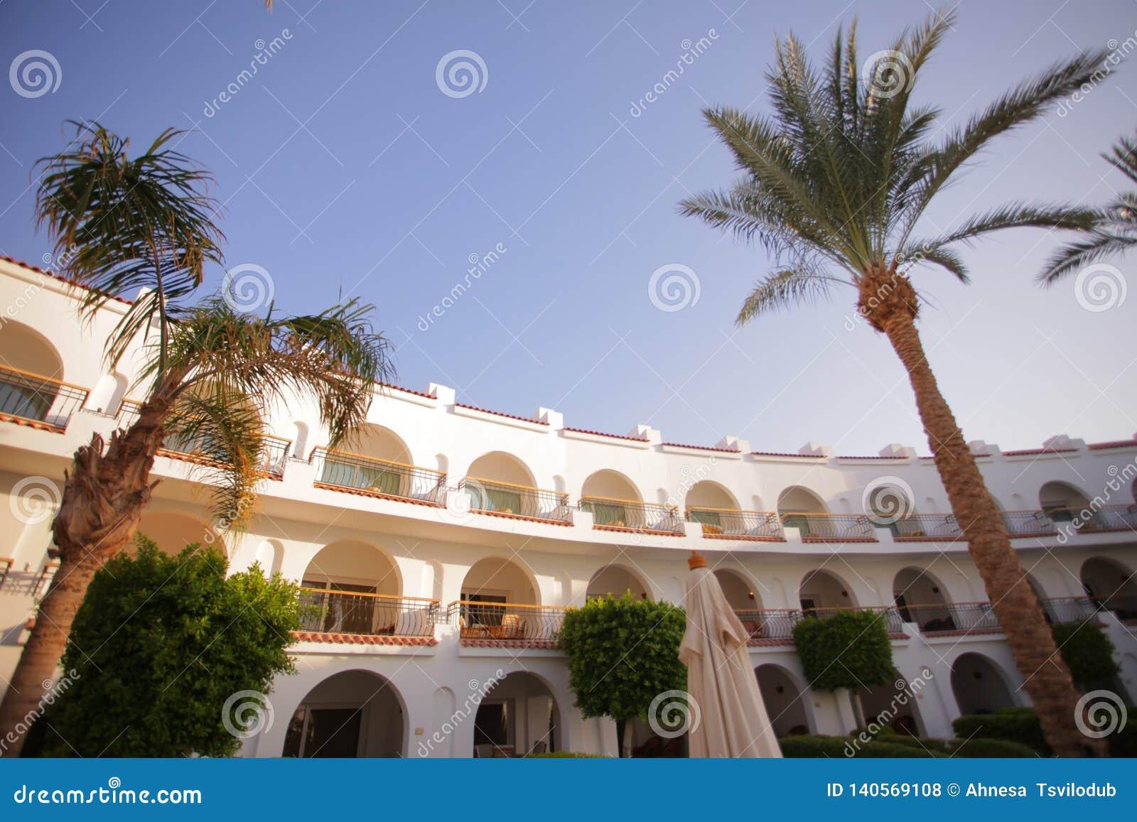 Luksusowy hotel z drzewkami palmowymi
