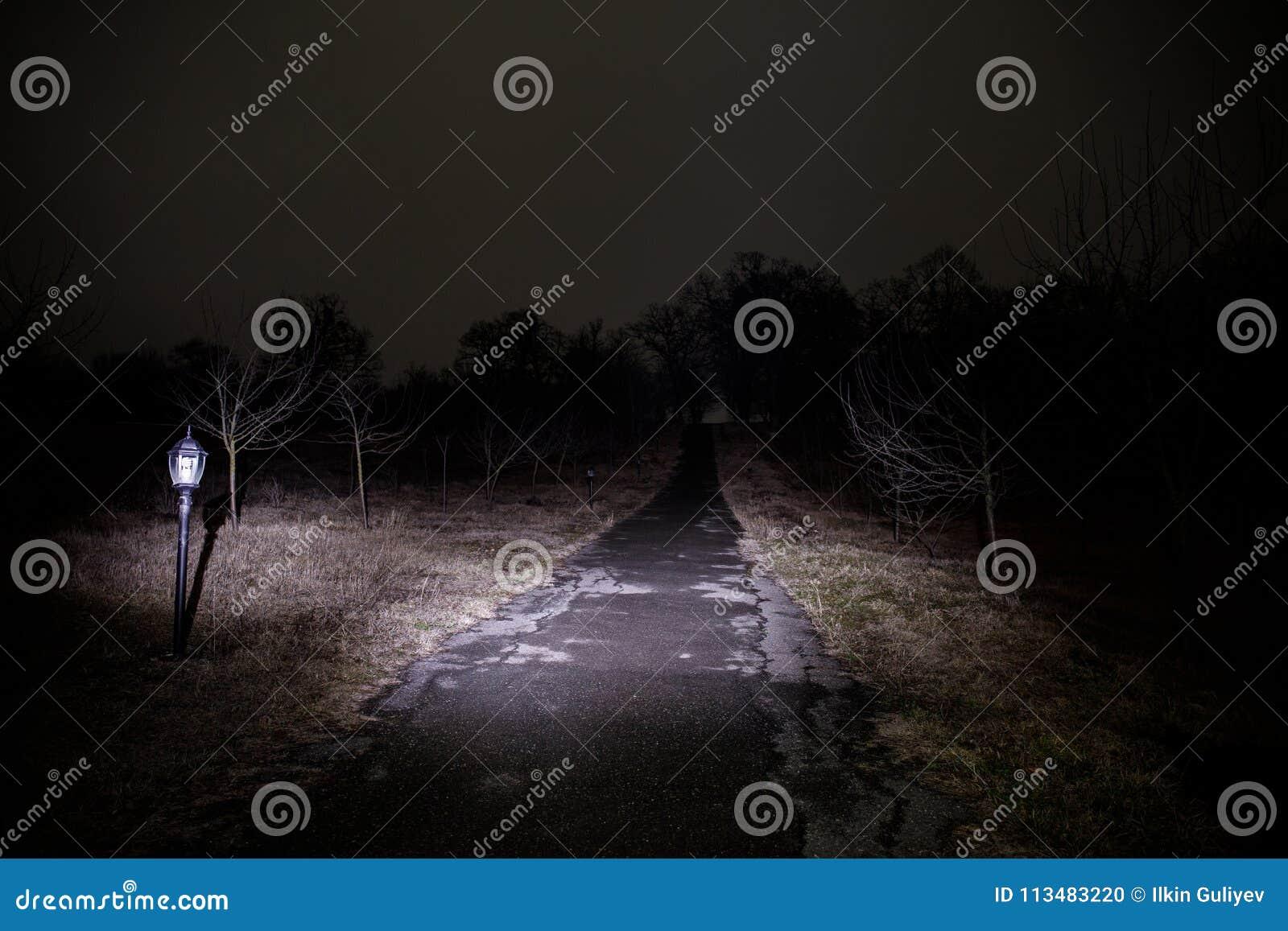 Lumière étrange dans une forêt foncée la nuit Silhouette de personne se tenant dans la forêt foncée avec la lumière Nuit foncée d