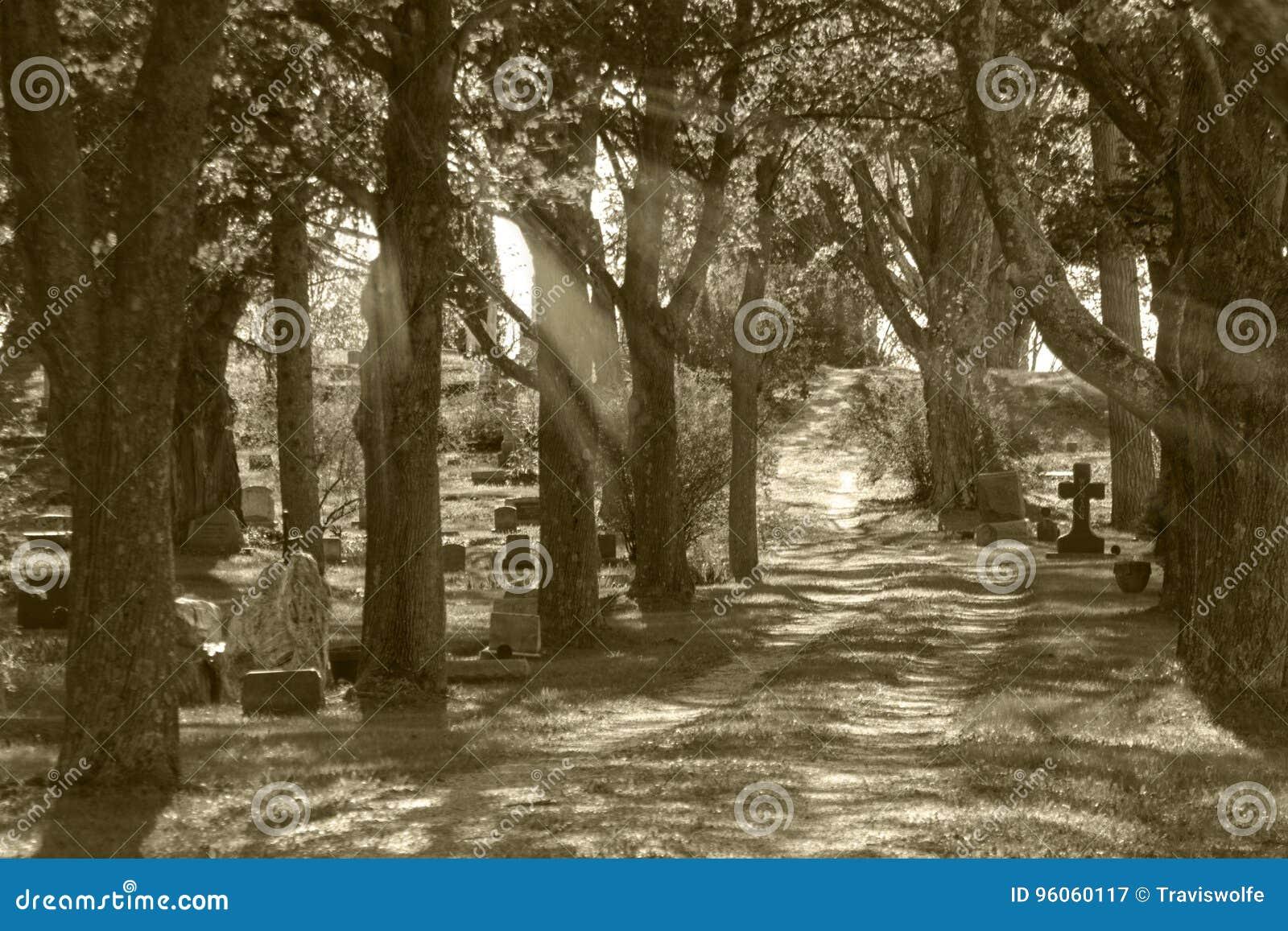 Lumière d un dieu de cimetière brillant par des arbres dans le cimetière