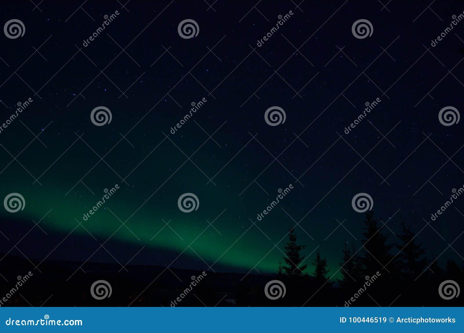 Lumière du nord d aurora borealis sur le ciel nocturne d hiver au-dessus des arbres