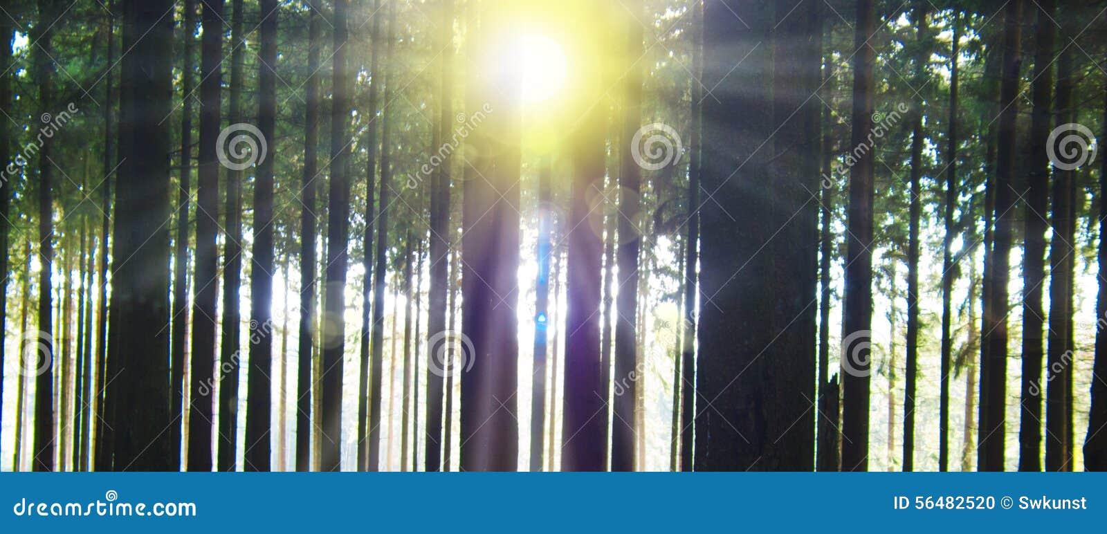 Lumière du soleil dans la forêt