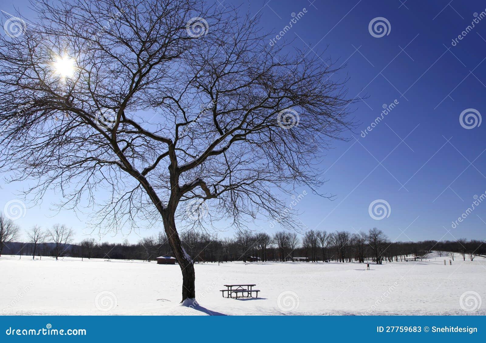 Lumière du soleil de l hiver