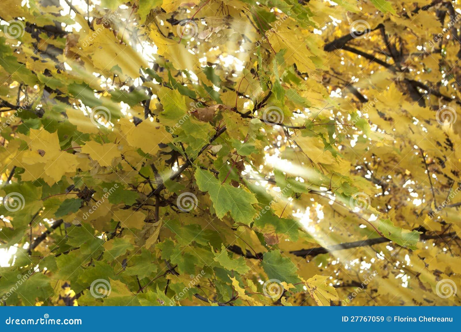Lumière jaune et verte de lames croisée