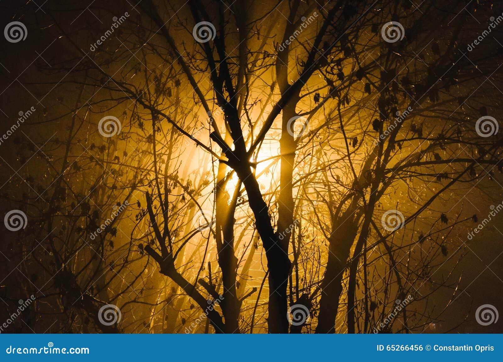Lumière par les branches nues