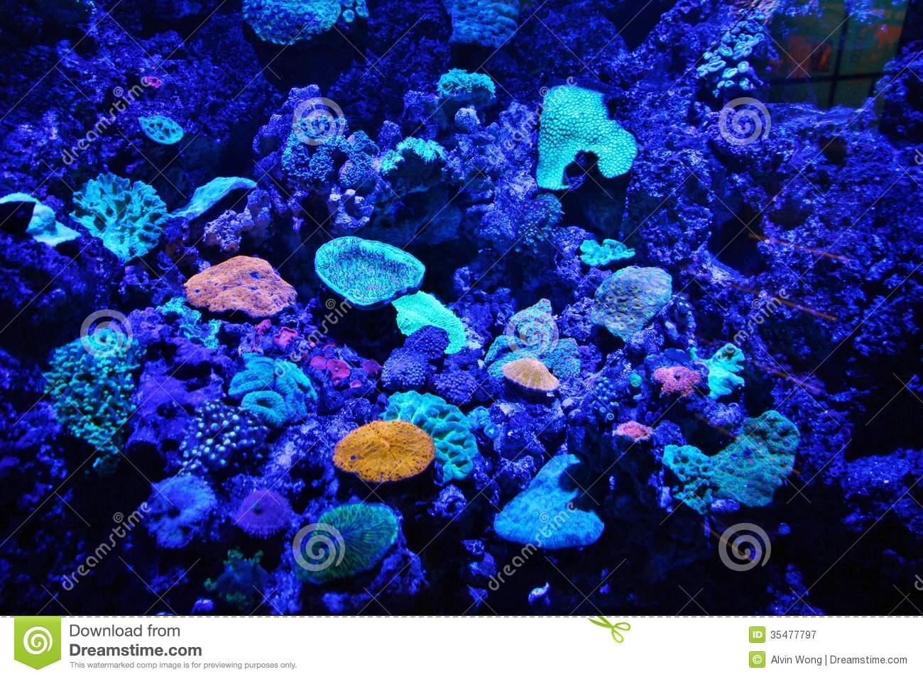 Blue aquarium royalty free stock photography image 35477797 for Blue light for fish tank