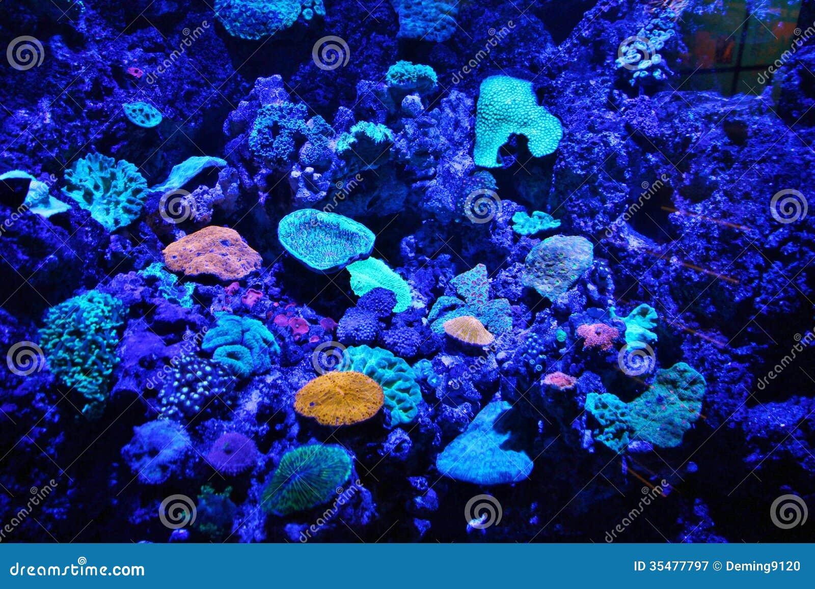 Blue Aquarium Royalty Free Stock Photography Image 35477797