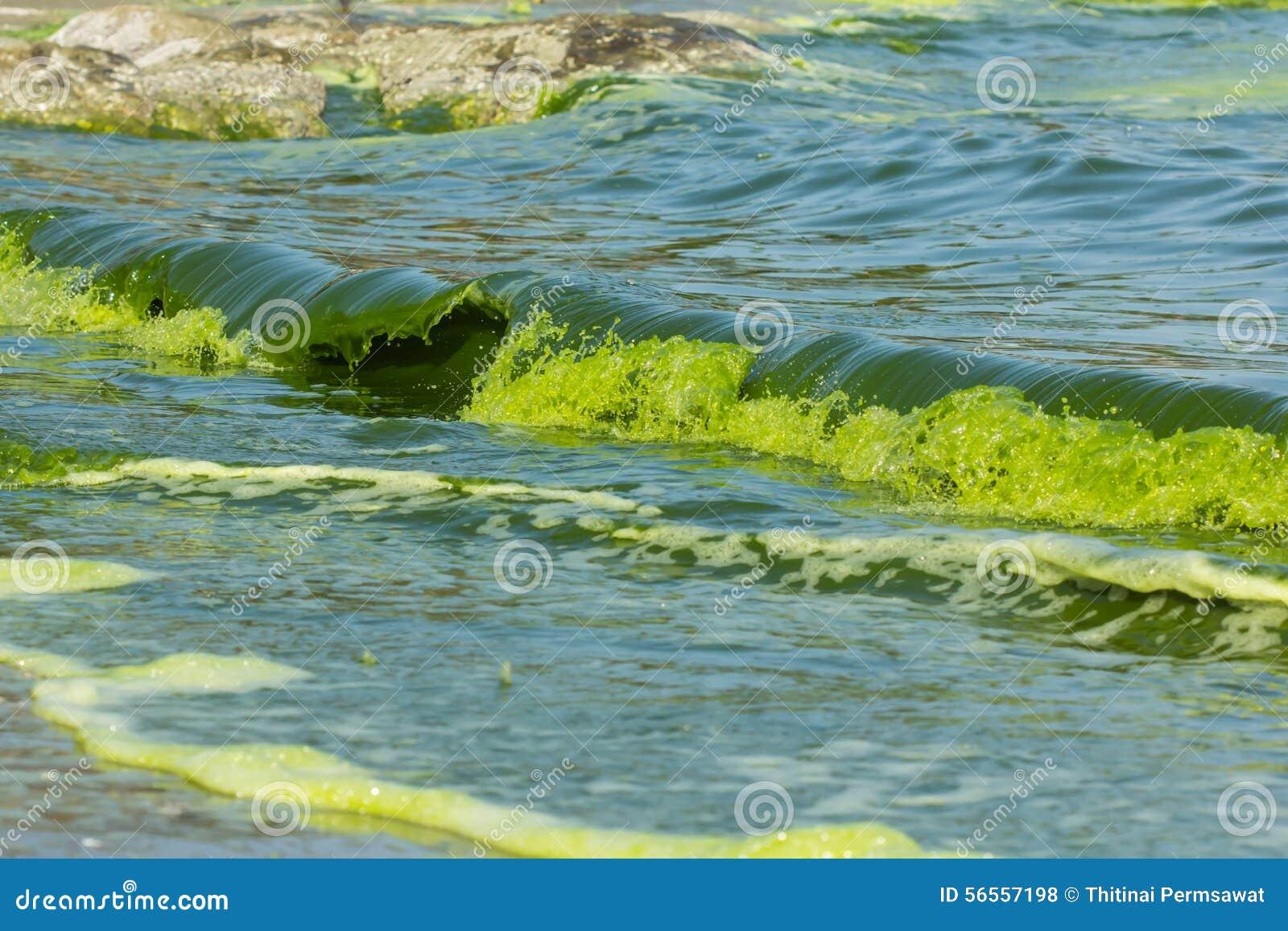 Download Luminescence πράσινης θάλασσας Στοκ Εικόνες - εικόνα από περιβάλλον, νύχτα: 56557198