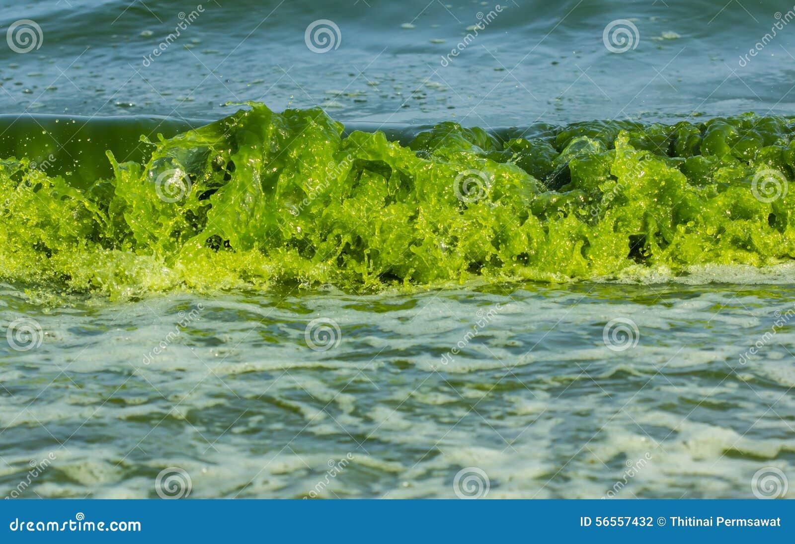 Download Luminescence πράσινης θάλασσας Στοκ Εικόνες - εικόνα από χρώμα, οδηγημένος: 56557432