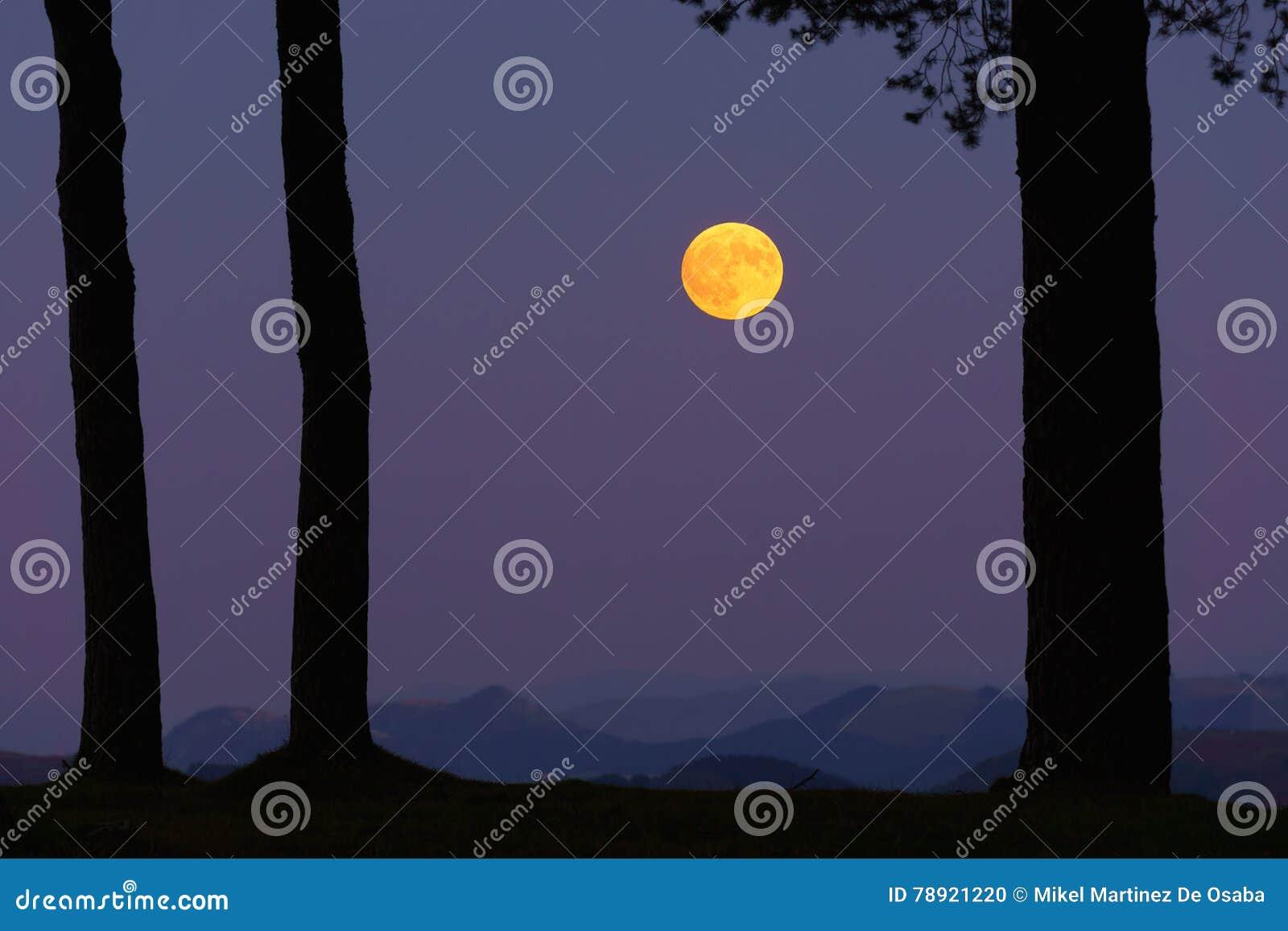 Luna amarilla llena en bosque