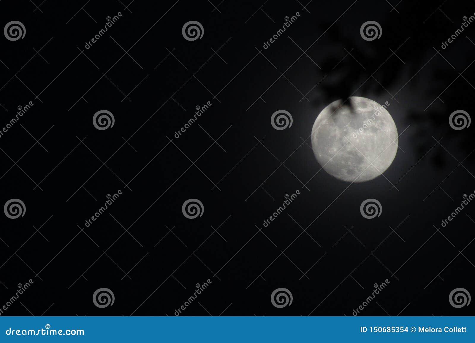Luna del verano