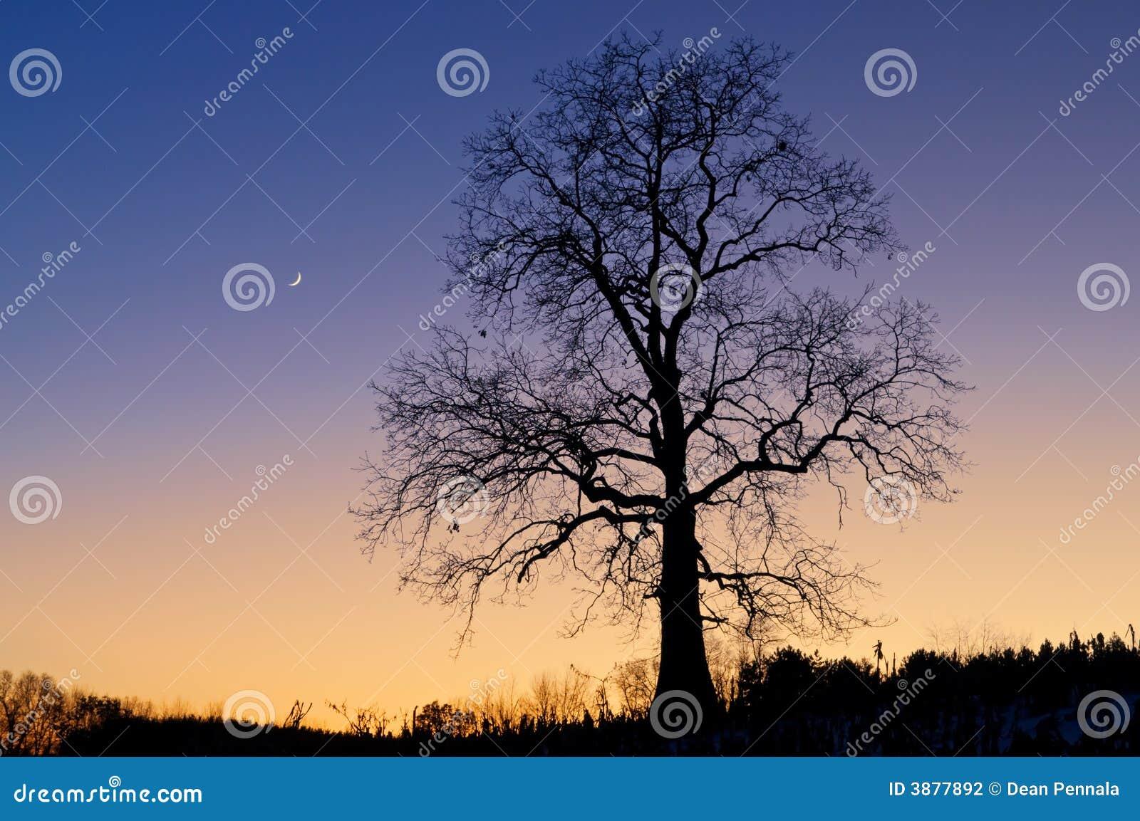 Luna di scheletro della mezzaluna e dell albero
