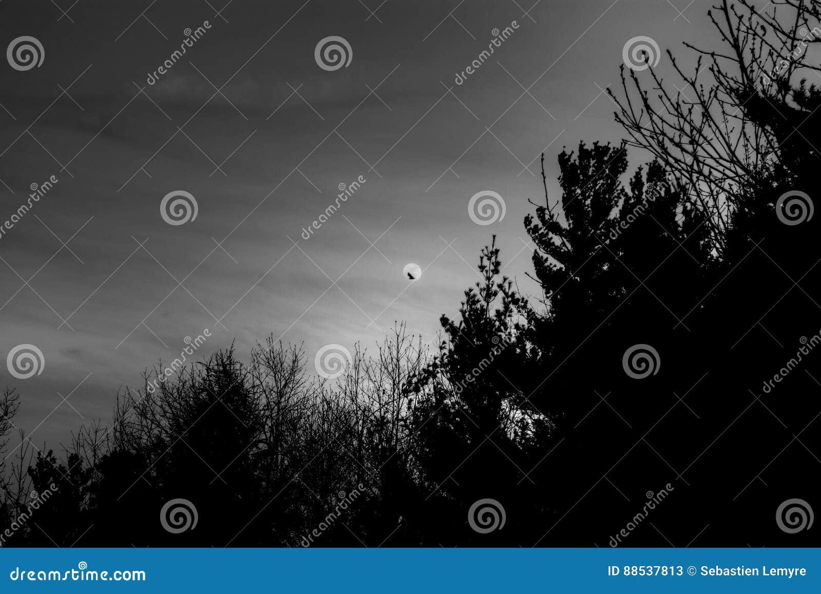 Luna espeluznante con el cuervo