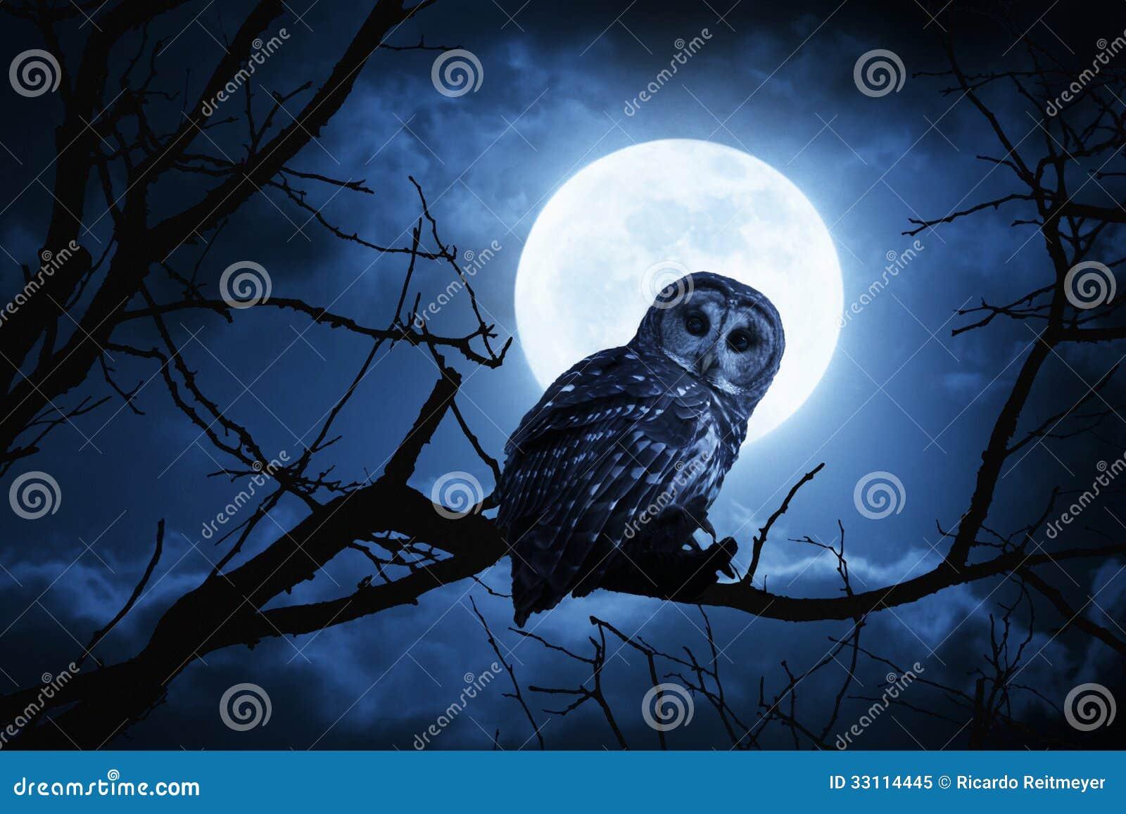 Luna Llena de Owl Watches Intently Illuminated By el la noche de Halloween
