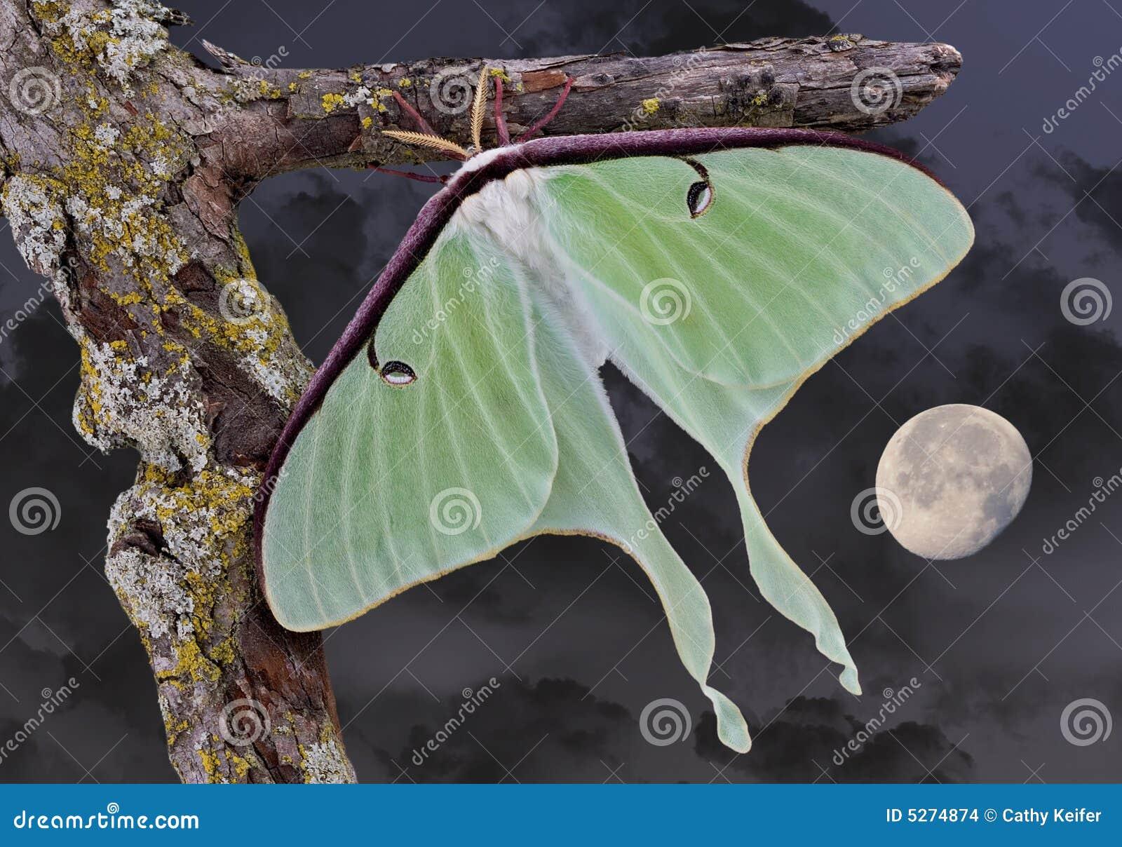Moth smoke themes