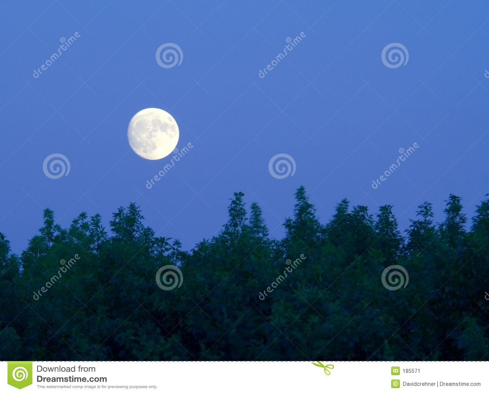 Luna piena luminosa sopra gli alberi al crepuscolo