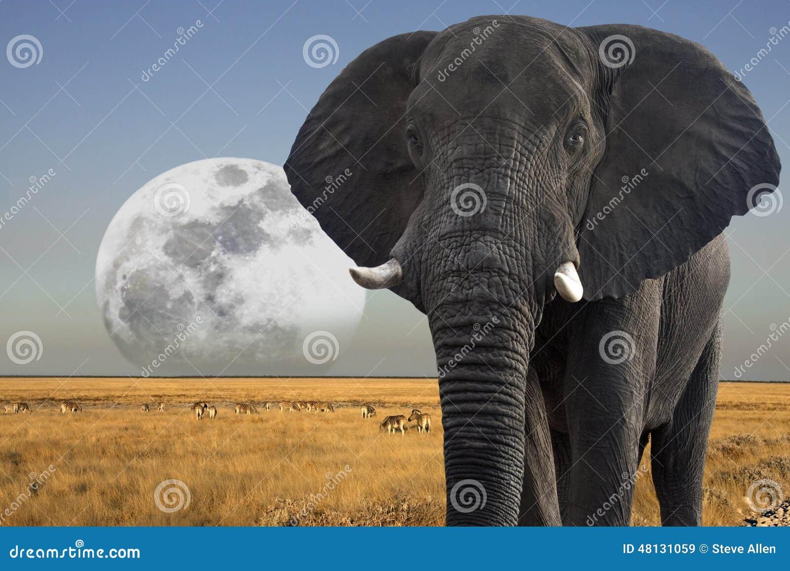 Luna que sube sobre la fauna - Namibia