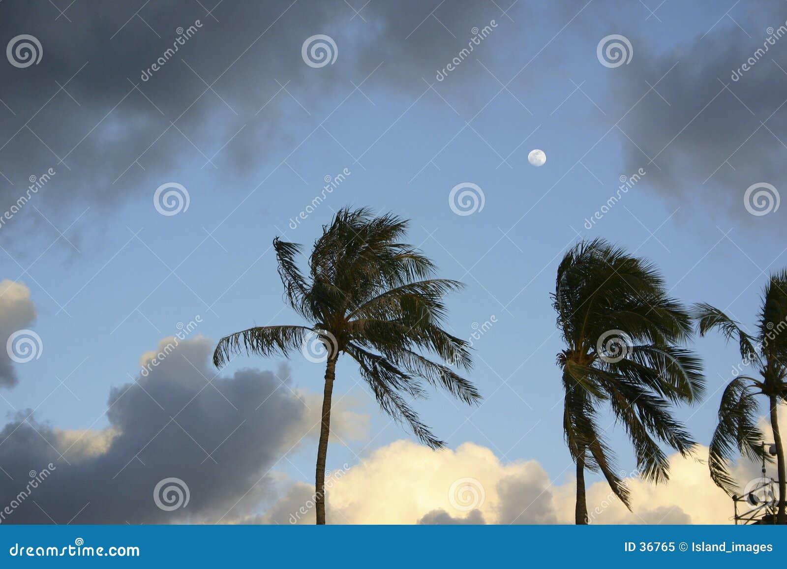 Luna sobre las palmas
