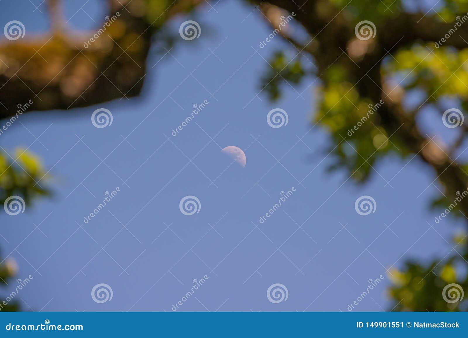 Luna vista a trav?s de los ?rboles