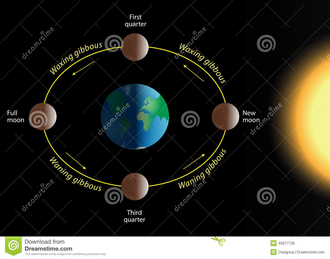 Lunar Phase Stock Vector Illustration Of 40977736 Phases Diagram