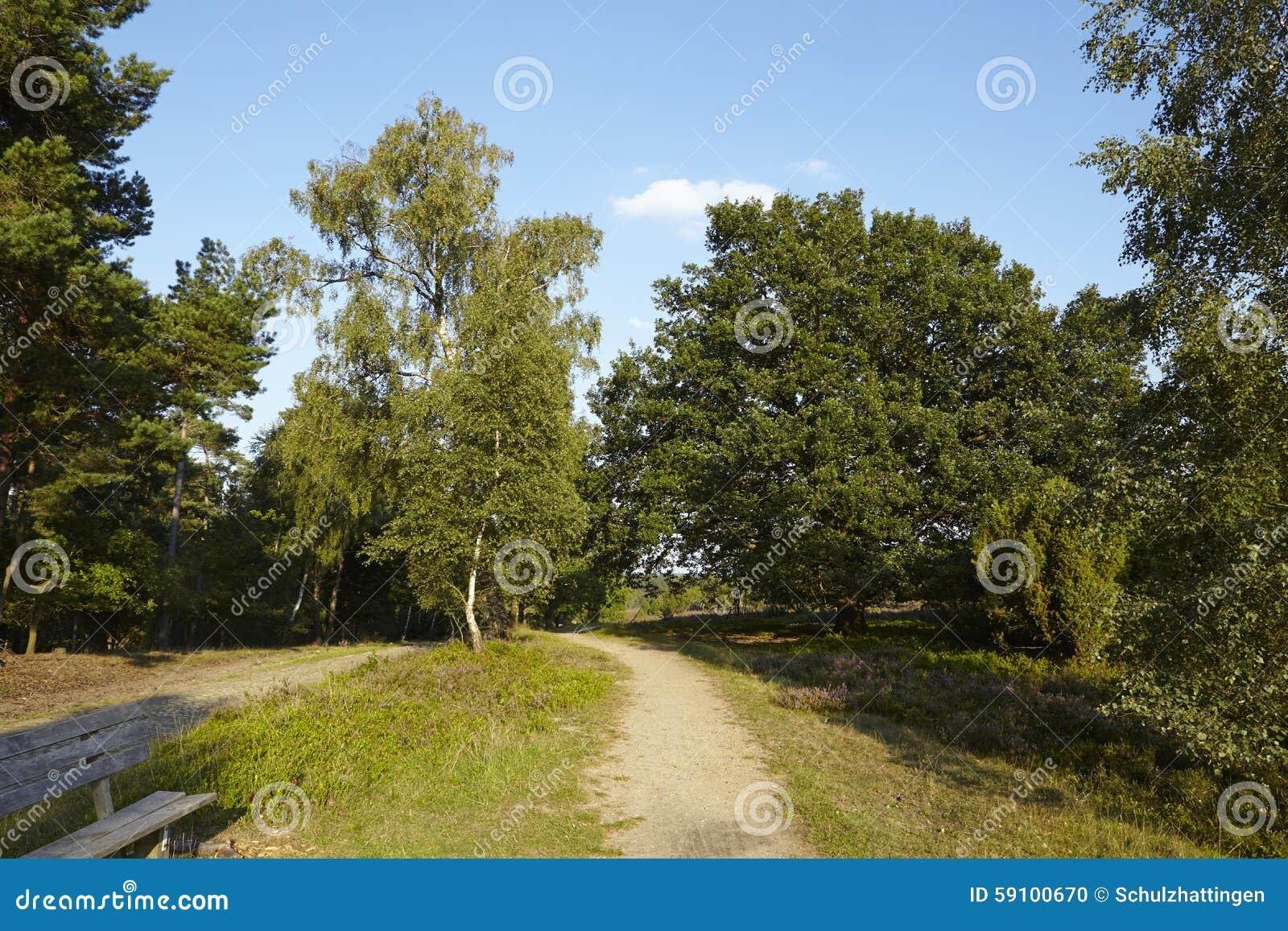 Luneburg荒地-有长凳的远足道路