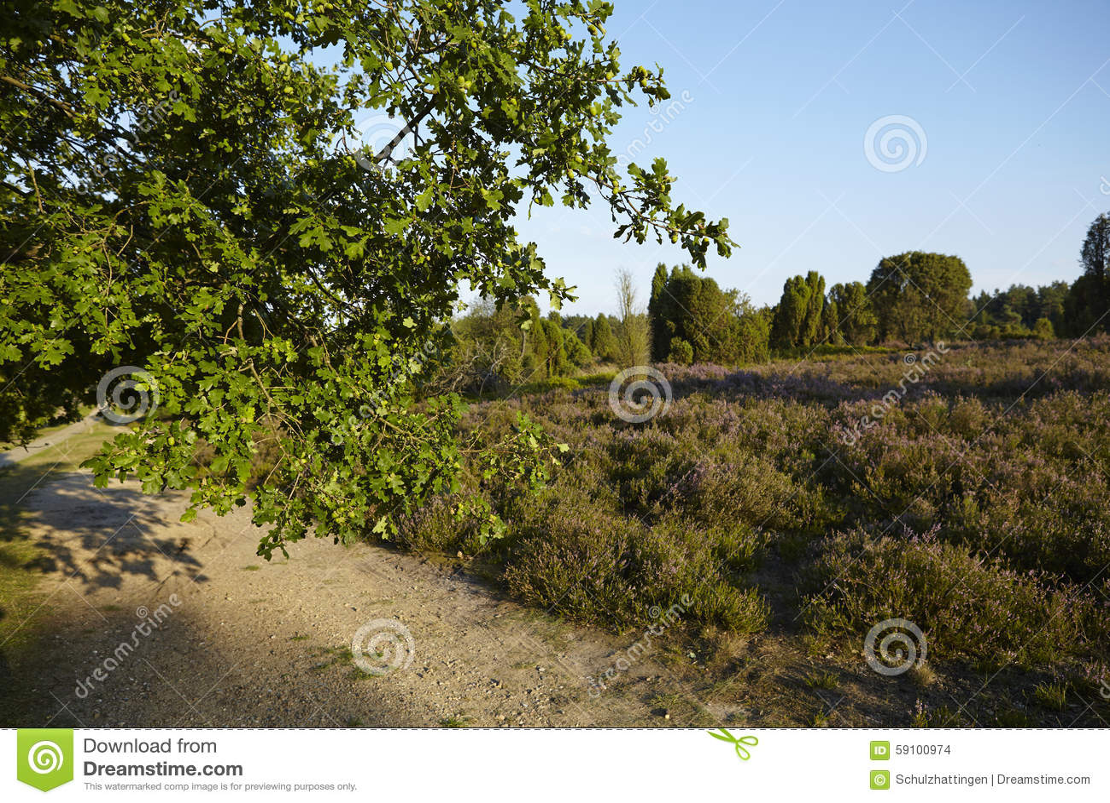 Luneburg荒地-橡树的早午餐和荒地环境美化