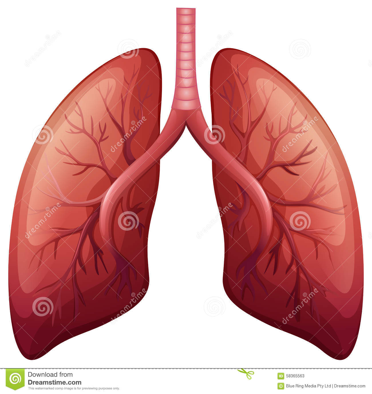Lung Cancer Diagram In Detail Stock Vector Illustration Of Body