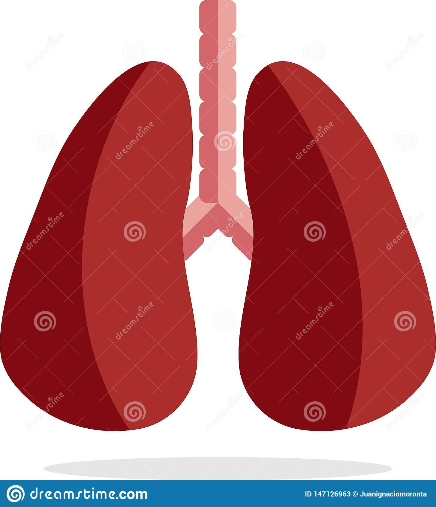 Lung icon, flat style, isolated on white background. Anatomy, concept of medicine