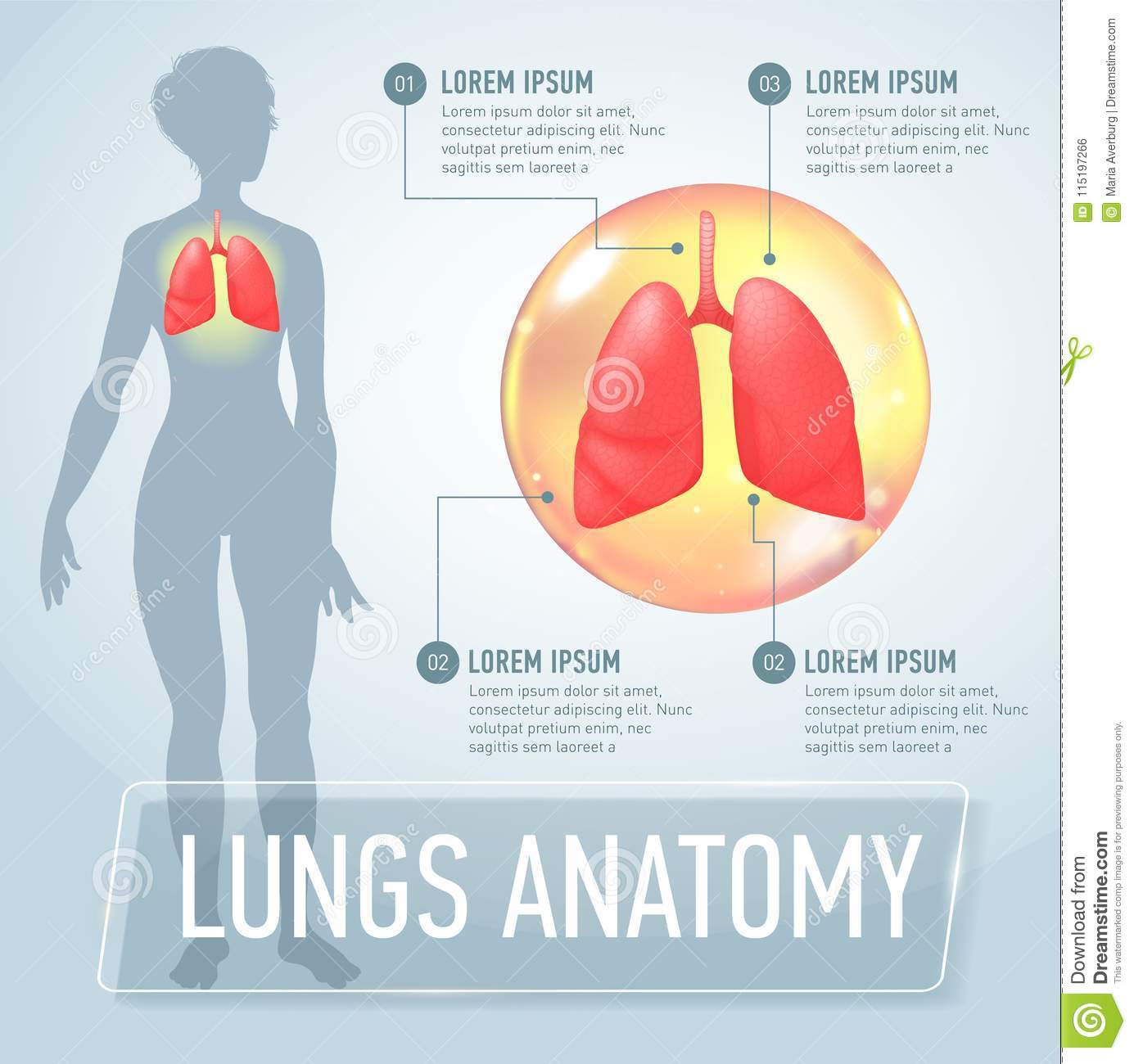 Lung. Modern Medical Infographics. Internal Organs In A Female Human ...