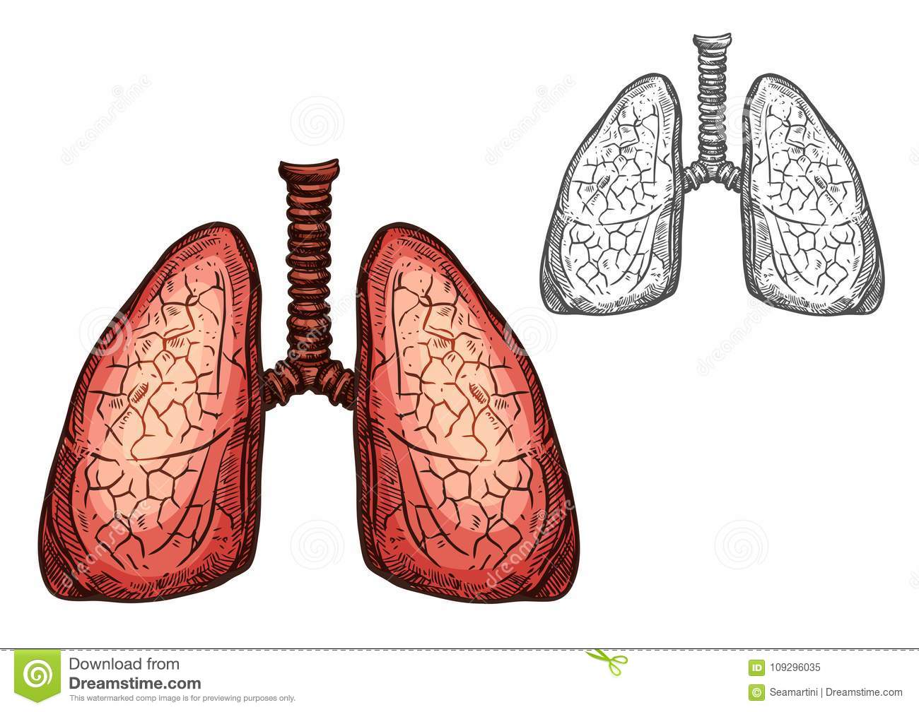 Lung Organ Of Human Anatomy Isolated Sketch Stock Vector