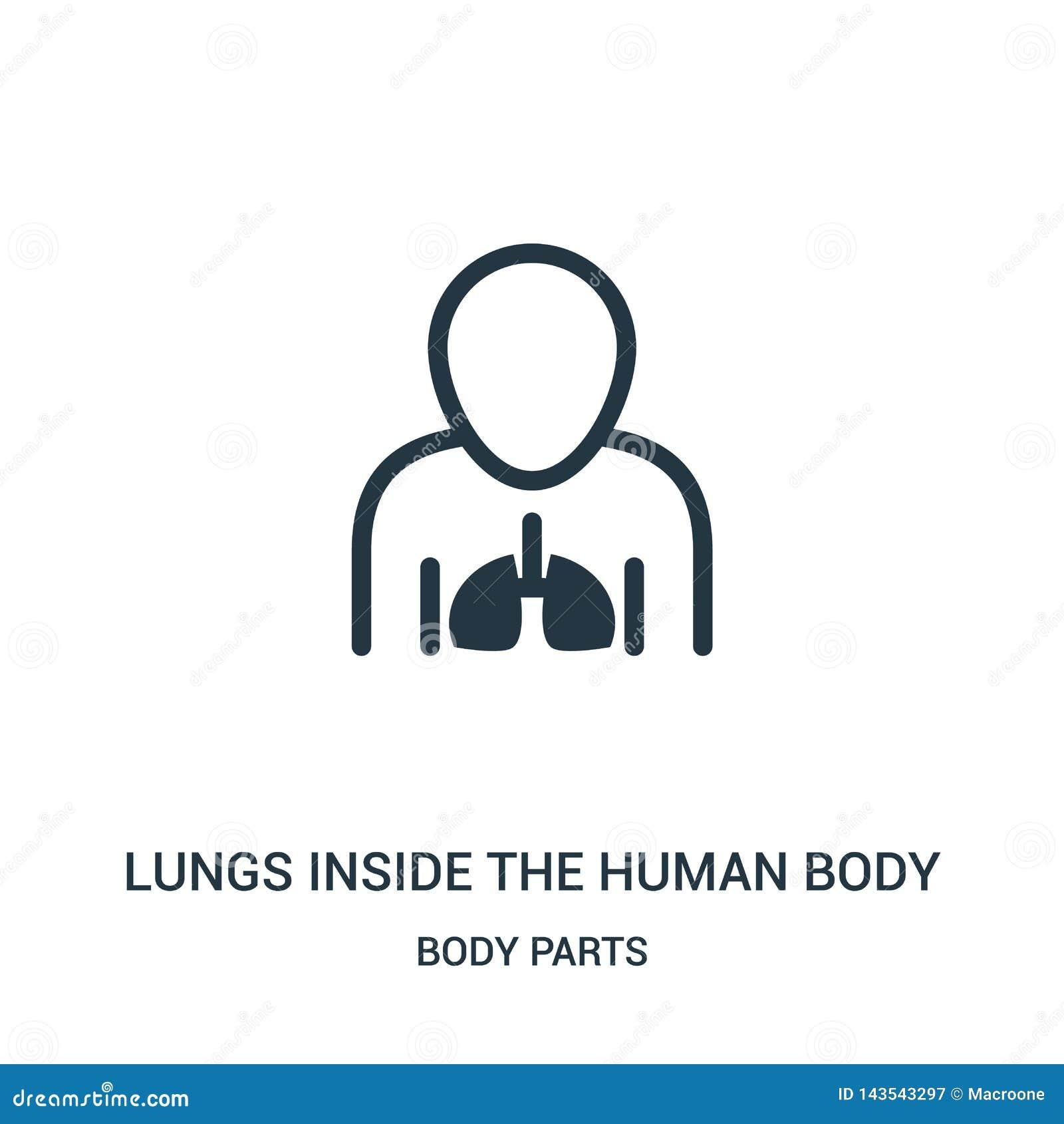 Lungor inom människokroppsymbolsvektorn från kroppsdelsamling Tunn linje lungor inom vektorn för människokroppöversiktssymbol