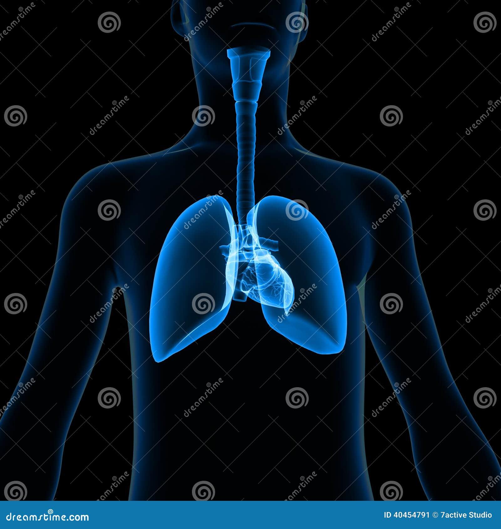 Lungor med kroppen