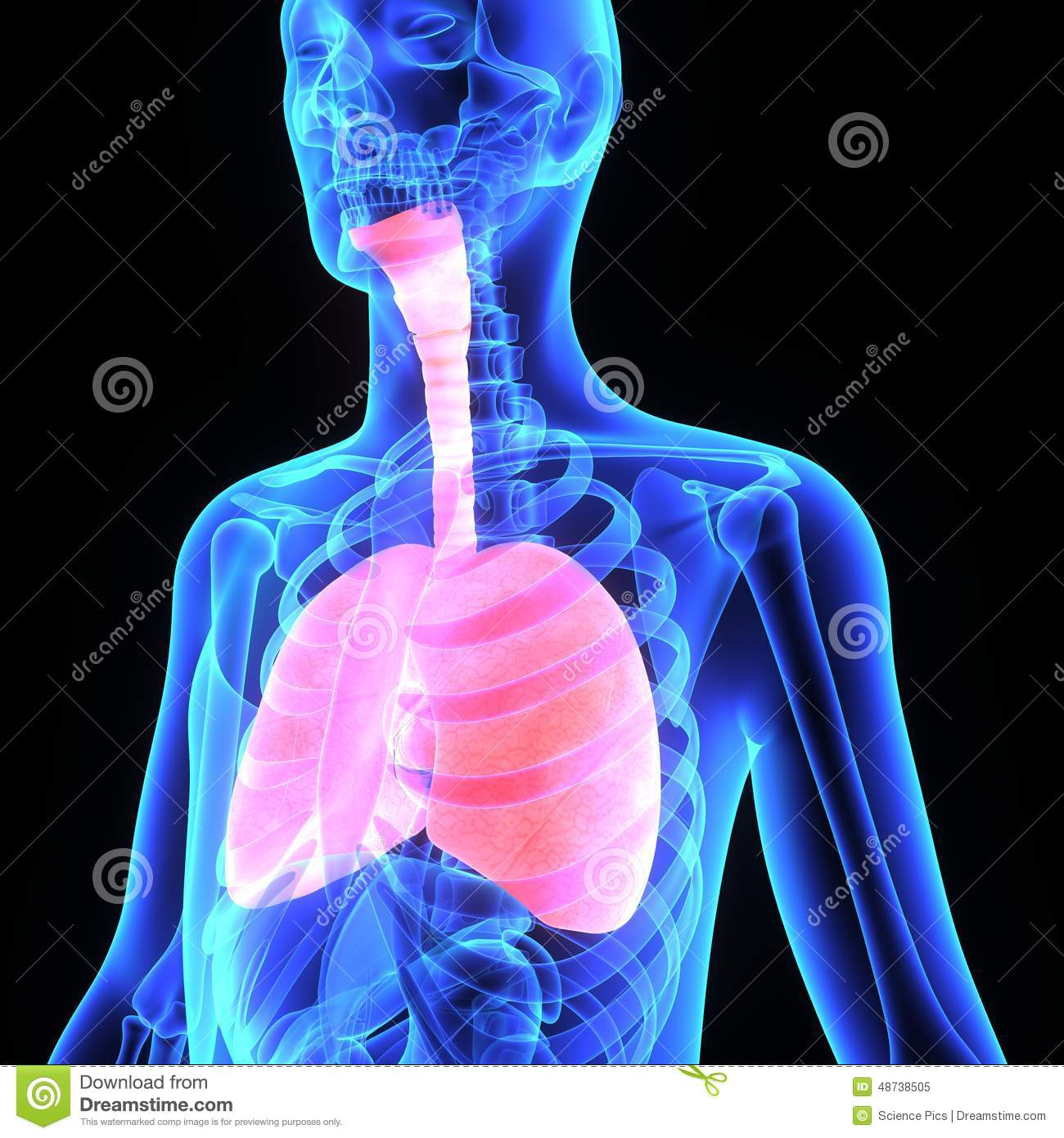 Lungs stock illustration. Illustration of nose, physiology - 48738505