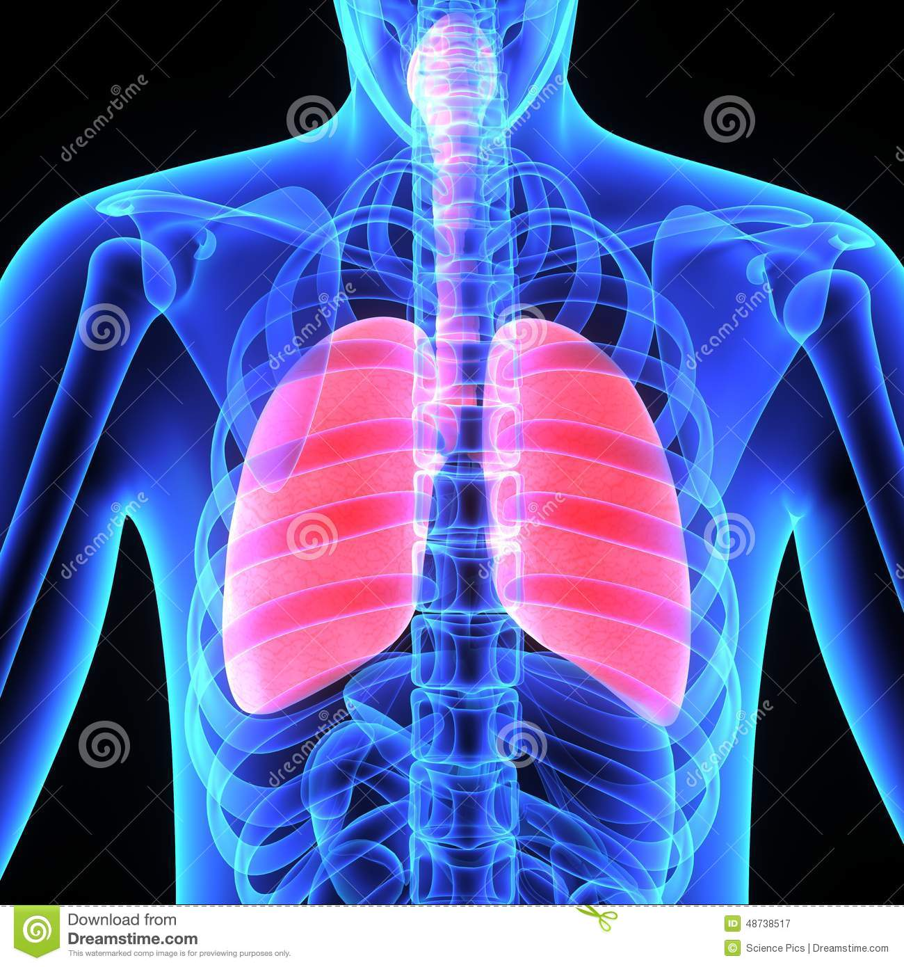 Where Are The Lungs Located Topsimages