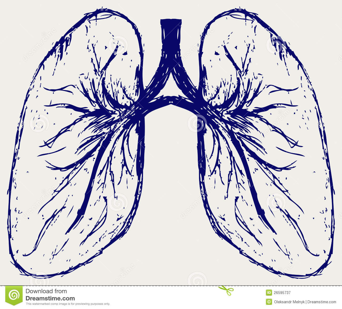 how-to-draw-lungs-step- ...