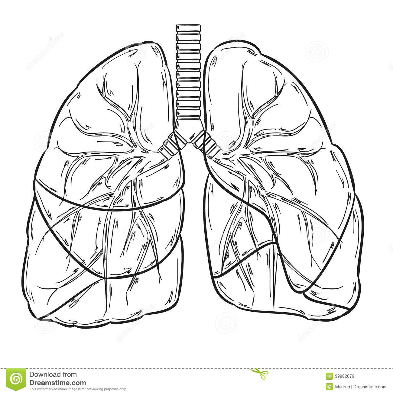Lungs Sketch Stock Vector Image Of Lobe Handdrawn Health