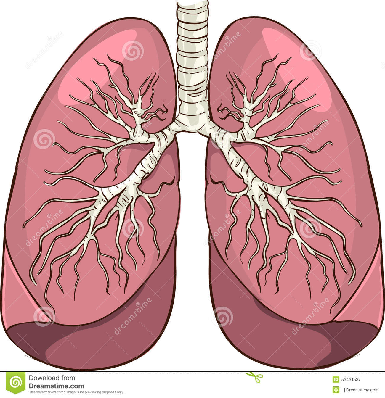 lungs stock vector image 53431537 vector playing cards deck vector playing cards deck