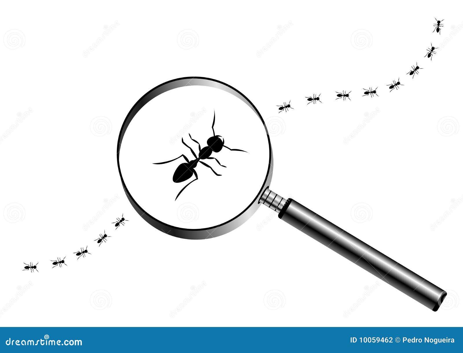 Lupa com formigas de marcha