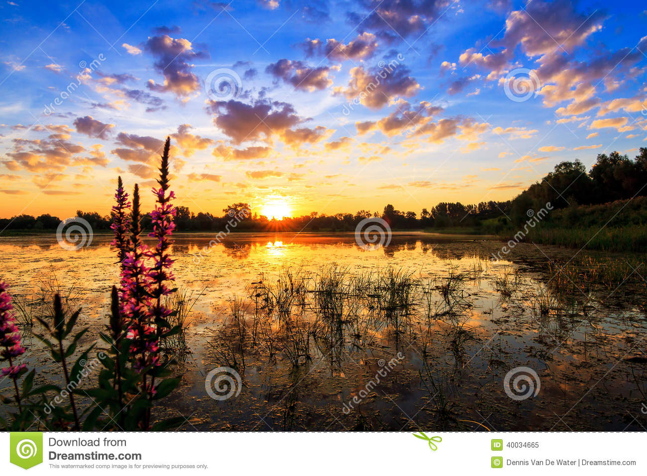 Lupinus lake sunrise stock photo image 40034665 - Blauwe kamer ...