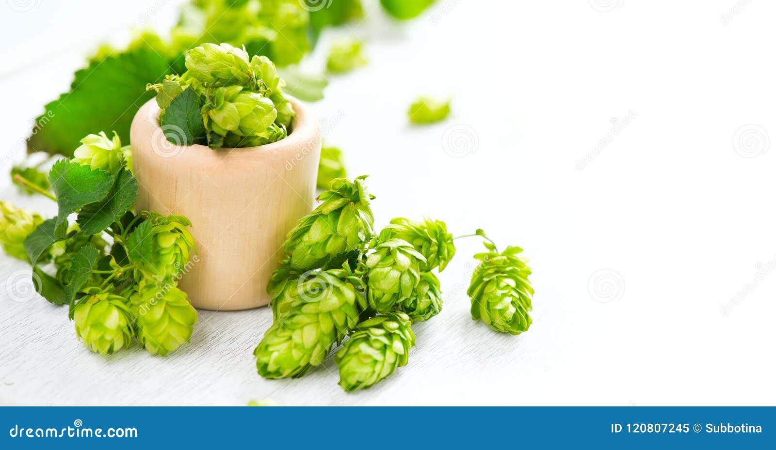 Luppolo Il tutto salta in ciotola di legno sulla tavola bianca brewery Ingredienti di produzione della birra Coni di luppolo sele