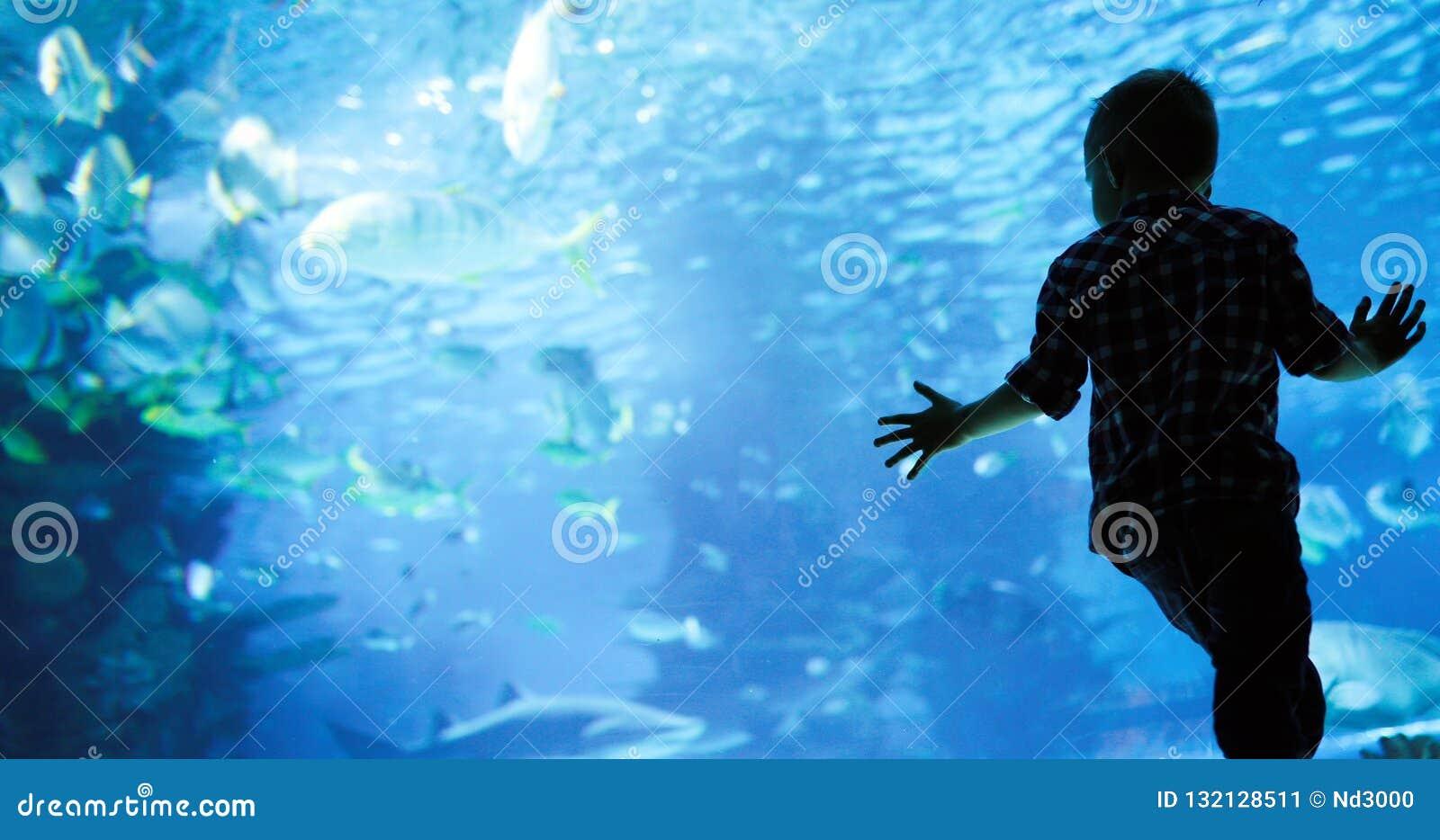 Lura att hålla ögonen på stimen av fisksimning i oceanarium