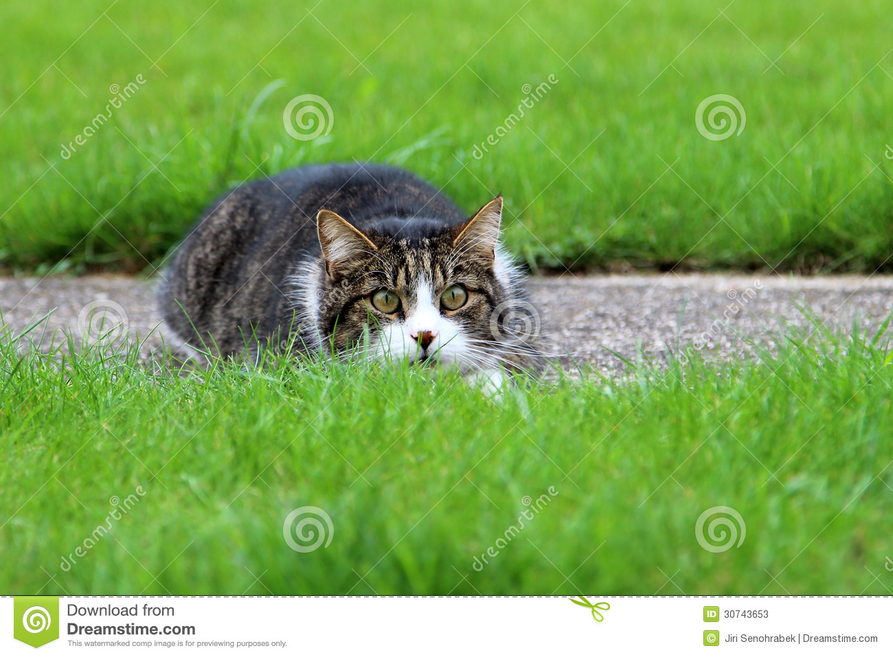 Lurking Cat Stock Photos, Images, & Pictures - 567 Images