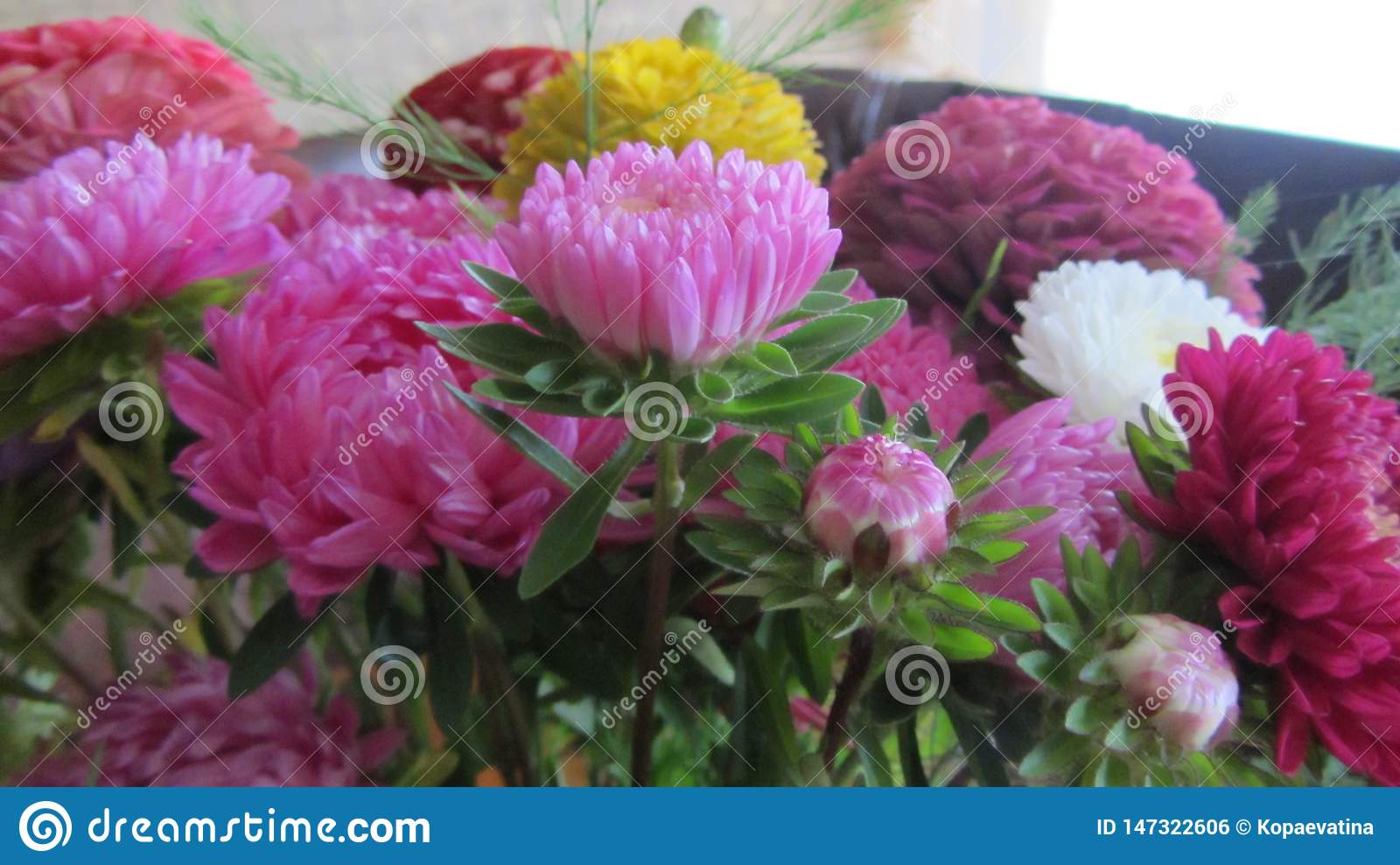 Bright, lush and fresh bouquet of asters.