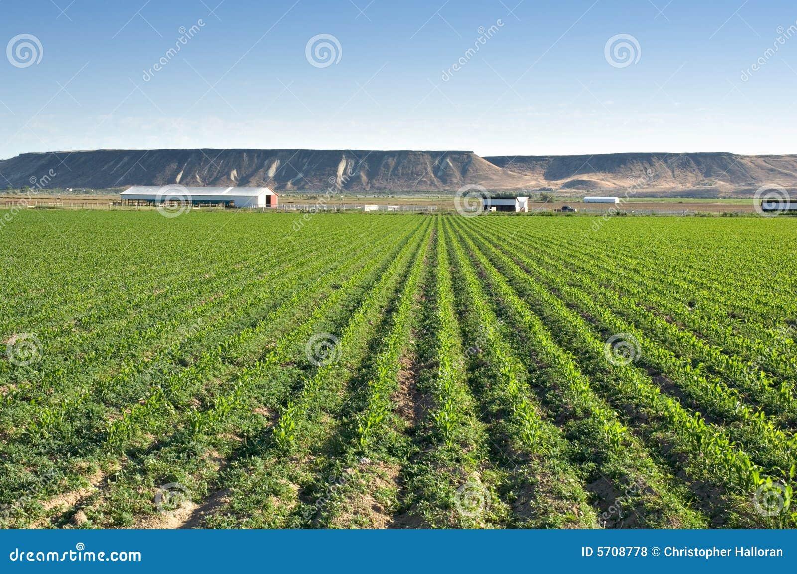 Lush green farmland