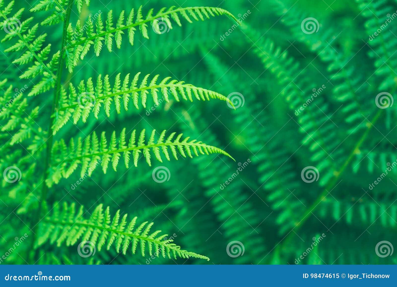 Lush green fern leaf in forest