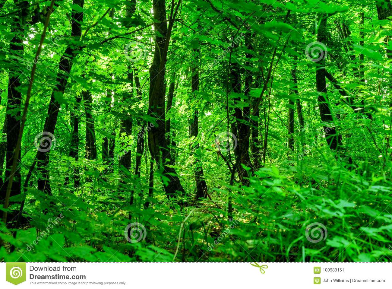 Lush Green Forest Background Stock Image Image Of