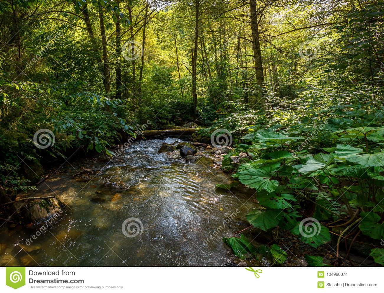 Lush green forest with tranquil stream