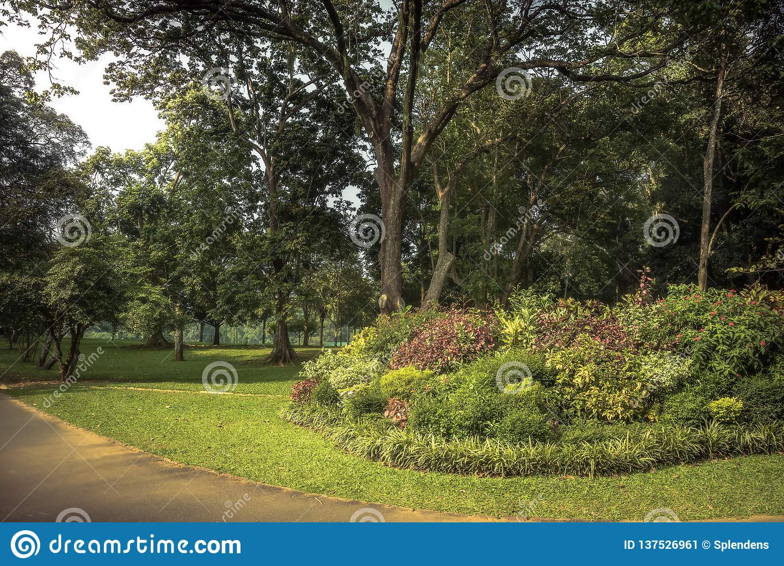 Lush Garden Scenery With Landscape Design In Royal Botanic Garden